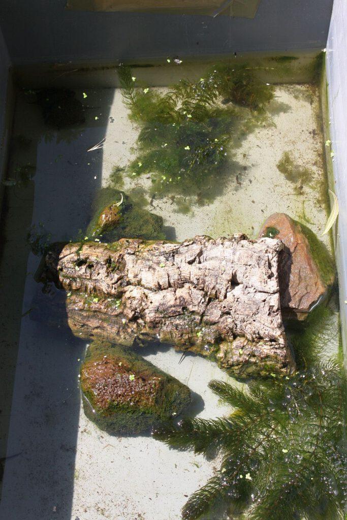 Freilandaufzuchtbehälter-für-Wasserschildkröten