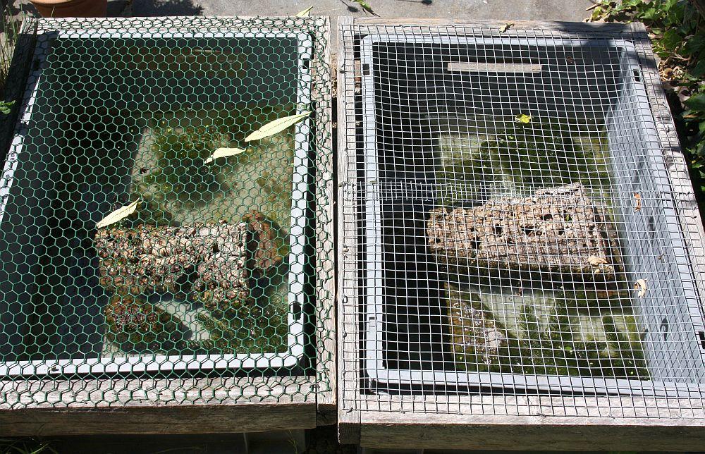 Freiland - Aufzuchtbehälter für Wasserschildkrötenschlüpflinge