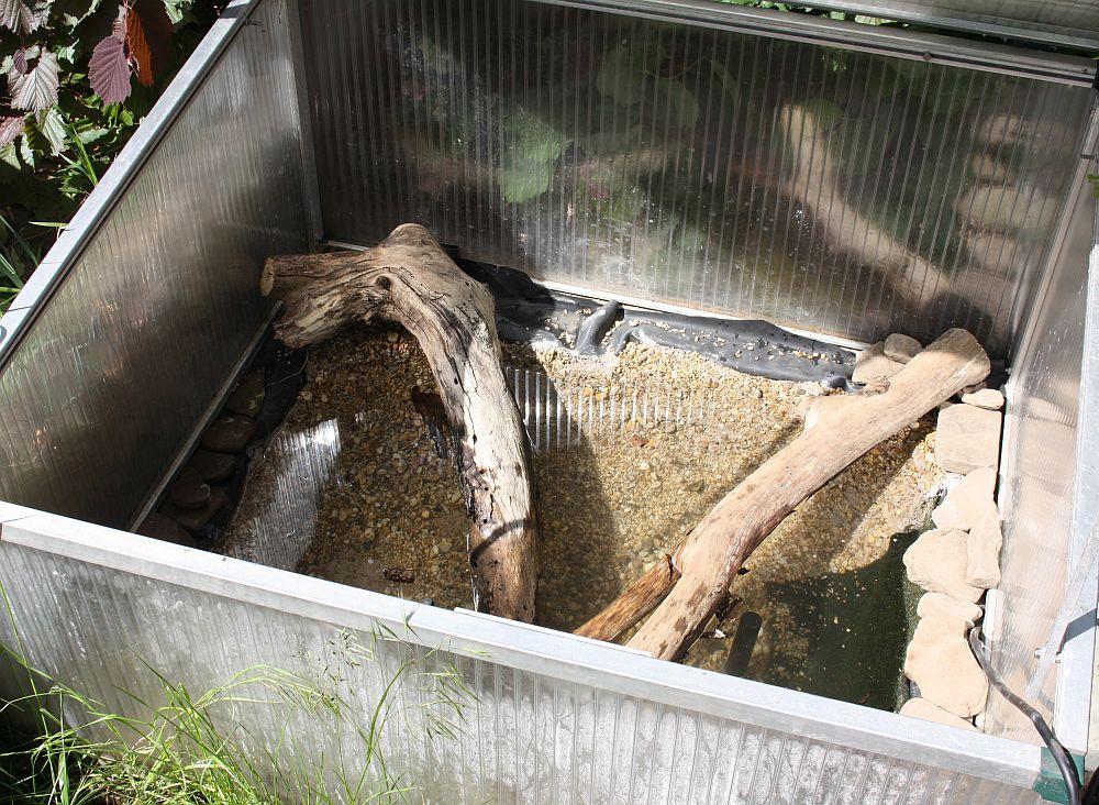 Bau eines Miniteiches zur Aufzucht von Wasserschildkrötenschlüpflingen