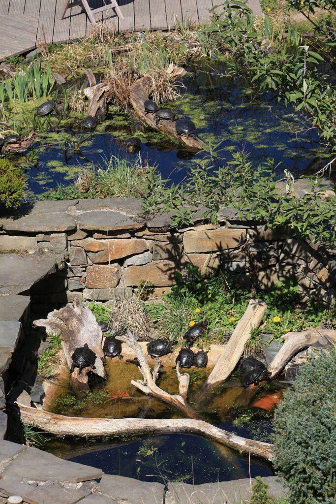 Der Schildkötenteich - Eine Freilandanlage zur ganzjährigen Haltung von Wasser-und Sumpfschildkröten